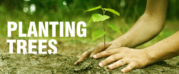 Planting trees according to vastu